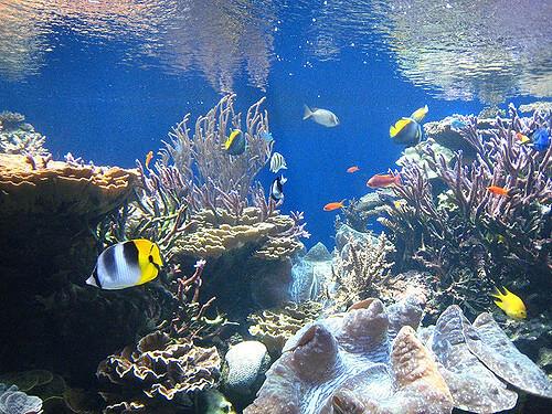 fische f r kleine aquarien die welt der fische. Black Bedroom Furniture Sets. Home Design Ideas
